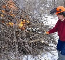 burning buchthorn-Dave Thompson