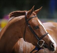 November 25, 2010 World Equestrian Games Photos