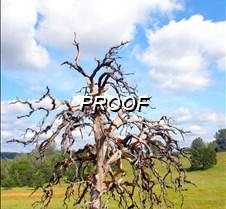 Ol Tree