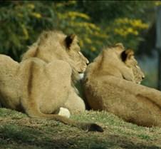 Wild Animal Park 03-09 183