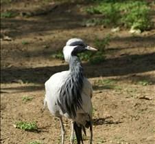Wild Animal Park 03-09 308