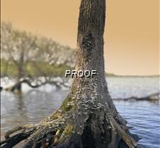 treeroots2