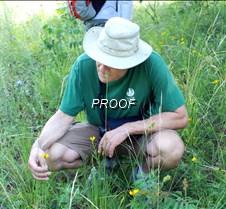 Coreopsis not VA dandelion