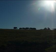 Sunrise for Elephants