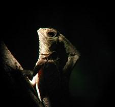 MA_hood_Iguana_dark