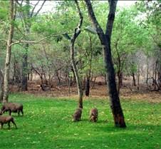 Lokuthula Safari Lodge Zimbabwe0014