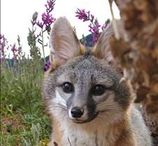 0gray fox carson Nov 04