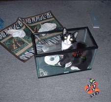 kitty picts dec 03 002