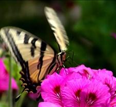 butterfly28