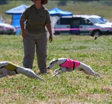 Whippets_8July_Run1_Course8_0329