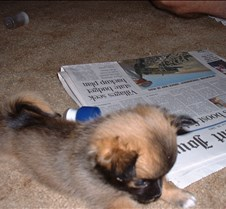 Puppy Picts 034