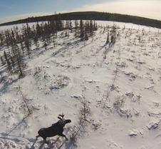 moose-aerial_crop