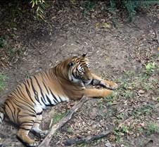 J Zoo 0611_063