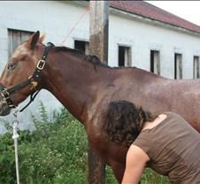 Dirty Horse!