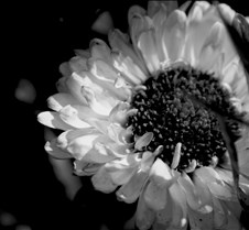 flowerblackandwhite4