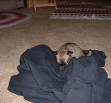 Puppy Picts 033