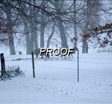 02/02/2014 Snow Horses