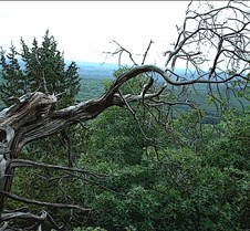 Mountain Gnarled 2