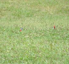 Birds at Kalalau Valley overlook