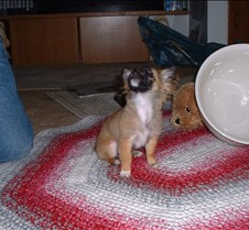 puppy picts 9-21-03 038
