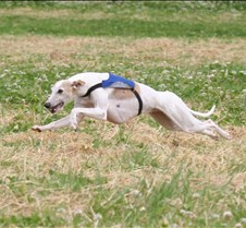 Whippet_8Jul_BOB_Run_OFF_5401CR