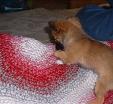 puppy picts 9-21-03 076