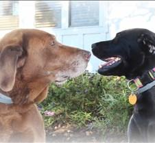 Ferguson Dogs