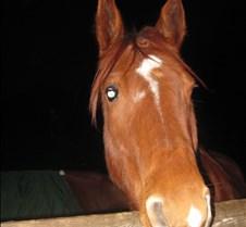 Night Ride Dec. 2009
