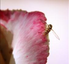 Tiny Bee 2