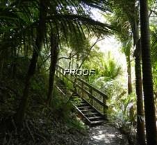 Kiwi Bush walk