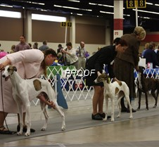 Best_Puppy_Competition_2773_8X10