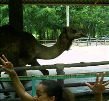 Dorie chasing camel
