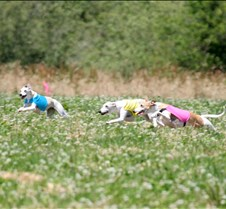 Whippets_7July_Run1_Course1_3993CR