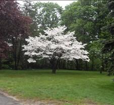 spring 2011 064