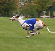Run2_Course2_IMG_6367 copy