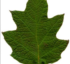 greentexture