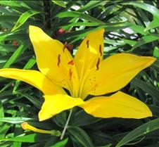 Southern Yellow #1