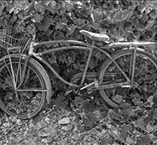 BikeInLeavesBW