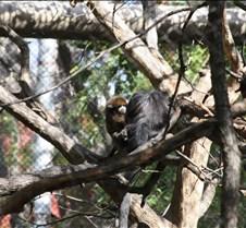 J Zoo 0611_056