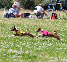 Basenji_7_July_Run2_Course3_4353CR