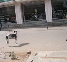 BangaloreStreetShot2