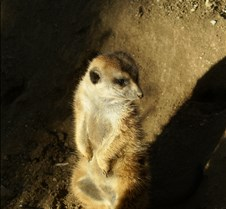 Wild Animal Park 03-09 373