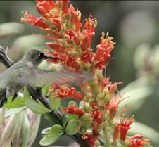 BirdPaper
