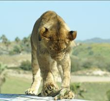 Wild Animal Park 03-09 207