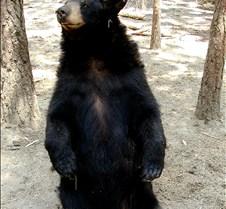 072402 Black Bear 19