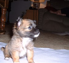 Puppy Picts 063