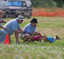 Basenji_7_July_BOB_Run_Off_9653CR