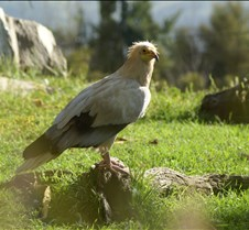 Wild Animal Park 03-09 315