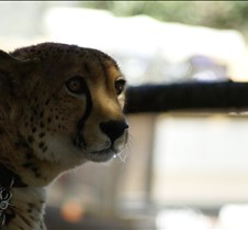 Wild Animal Park 03-09 015