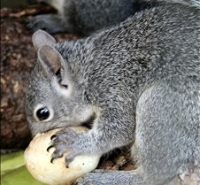 082102 Squirrel 122